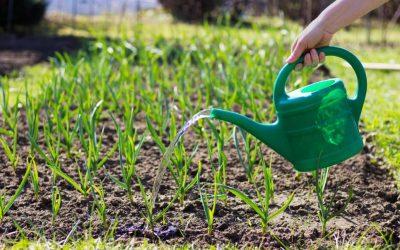 Seasonal Gardening in Florida